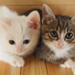 子猫の里親になるには?|ペットのおうちを選んだ理由